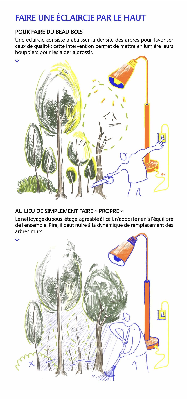 Marteloscope, faire une éclaircie par le haut, PNR des Pyrénées Ariégeoises.