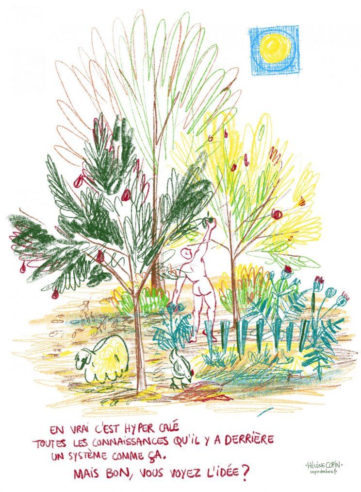 Agroforesterie à la Clédelle, copin.