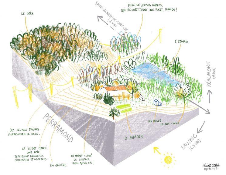 Perramond, quatre hectares dans les olives du Tarn.